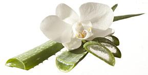 Adaos Aloe-Vera natural